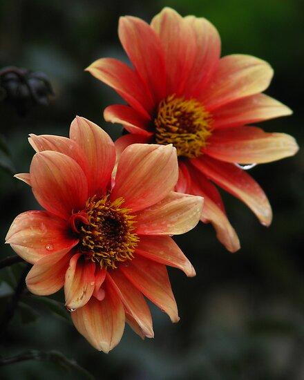 Rainy Flowers by Phillip DePetro