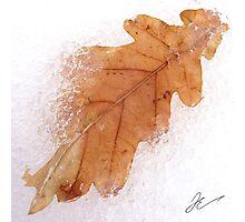 Frozen leaf Photographic Print