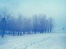 Blue Woodland by sandra arduini