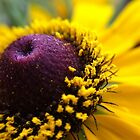 Yellow Pollen by lindsycarranza