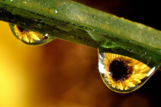 Dew Drops by Robin Lee
