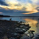 Sunset, Shoreline And Sammy by Carolyn  Fletcher