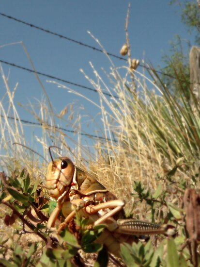 Hiding Hopper by peepholephotos