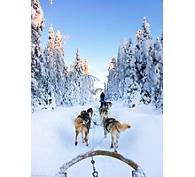 Husky Sledge, Lapland Photographic Print