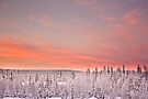 Sunset Lapland by Tim Topping