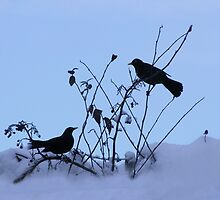 Blackbirds in the Snow by Forfarlass