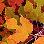 Mulberry Leaves in Autumn Shades by WildWheat