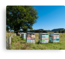 beehives 2 Canvas Print