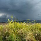 Moody Sky Over West Shore by RH-prints