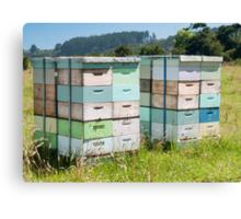beehives 6 Canvas Print
