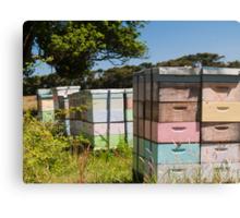beehives 7 Canvas Print