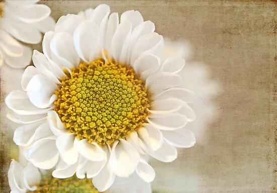 Textured Daisy by Linda  Makiej