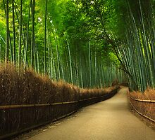 Bamboo Grove - Limited Edition Fine Art Photograph by Jarrod Castaing