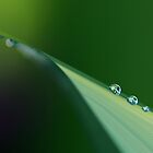 Droplets on Green by Julien Johnston