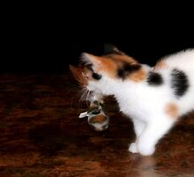 A Game of Cat and Mouse by Carla Jensen