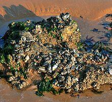 Marine Symbiosis  by Susie Peek