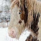 Winter Horse by Steve  Liptrot