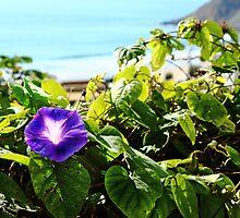 Sea Weed. by Paul Pasco
