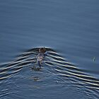 Rippling Sam by fototaker