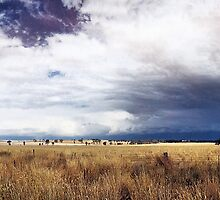 Cootamundra Storm Clouds by George Petrovsky