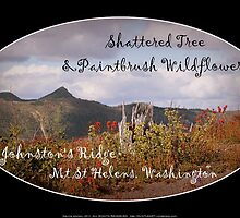 shattered tree & paintbrush wildflowers on Johnston's Ridge oval by Dawna Morton