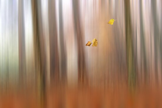 Autumn serenade by Lyn Evans