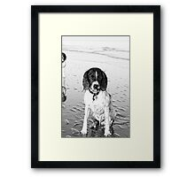 benson on beach Framed Print