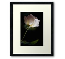 Perspective Rose Framed Print