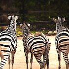 3 sexy zebra butts by EmilyFNM3D