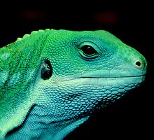 Green Dragon by Thea 65