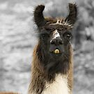 I'm the Lama by Dragonfly River Studios