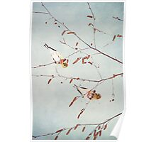Goldfinch Gymnasts  ~ Poster
