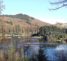 Bwlch Nant Yr Arian - Mid Wales by Peter O'Driscoll