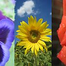 Summer Flower Collage by sunsetgirl