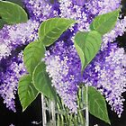 LILACS IN A VASE by Dian Bernardo