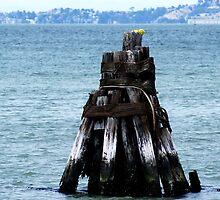 Low T-I-de at San Francisco Bay by joiwatani