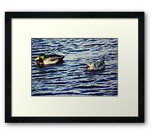 Hello, duck. Framed Print