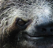Evil Sloth Walk Sticker