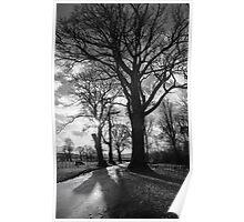 Tree Study No. l Poster