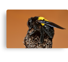 Bumble Bee.......... Canvas Print