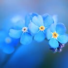 Forget me not... by Ursula Rodgers