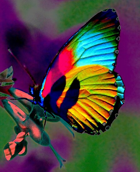 Funky butterfly by Antionette