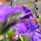 Hanging Basket 3 by OllieV