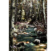 In the West End of the Shire -  Photographic Print