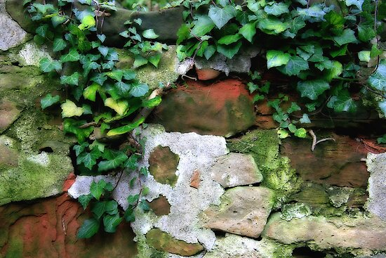 Ivy Wall by Linda  Morrison