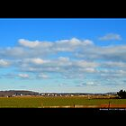 Open Field With View On Roanoke Avenue In The Morning - Riverhead, New York   by © Sophie W. Smith