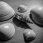 Seashells by Stevie B