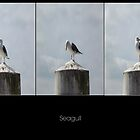 Seagull by Stevie B