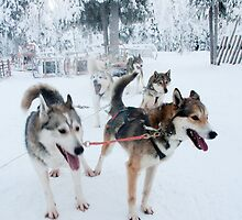 Huskies away by Tim Topping
