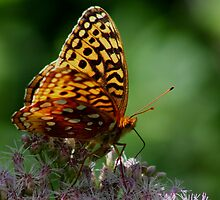Great Spangled Fritillary by Kane Slater
